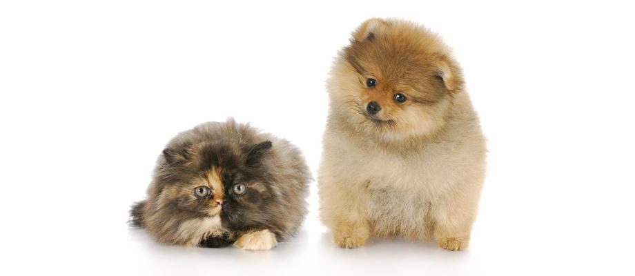 puffy-cat-dog_920x400